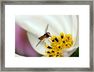 Afternoon Delight Framed Print by Lori Tambakis