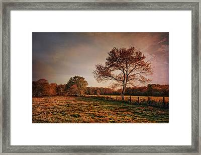 Afternoon D'light Framed Print by Robin-Lee Vieira