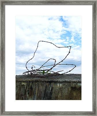Afternoon Escape Framed Print by Todd Sherlock