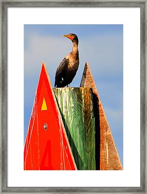 Afternoon Fishing Framed Print by Barry R Jones Jr