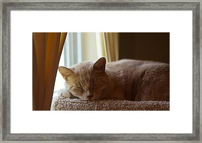 Afternoon Kip Framed Print