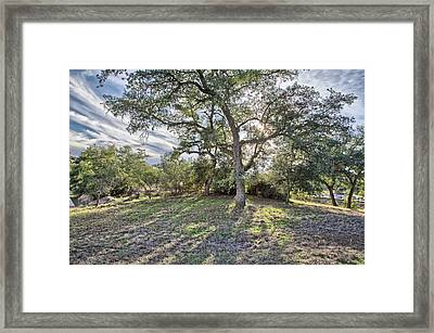 Afternoon Oak With Cirrus Framed Print