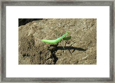 Afternoon Shadow Framed Print