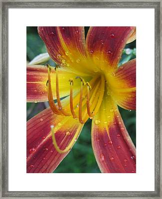 Afternoon Storm Framed Print by Todd Sherlock