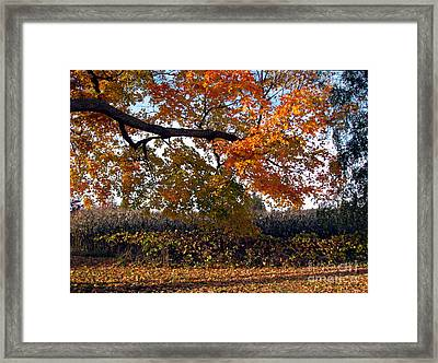 Afternoon Stroll- Autumn In The Country Framed Print by Inspired Nature Photography Fine Art Photography