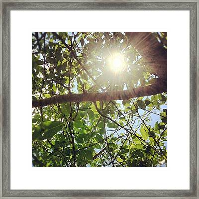Afternoon Sunflare Filters Through The Framed Print