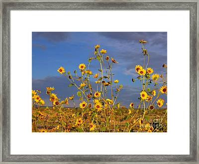 Against The Blue Sky Framed Print by Tamera James