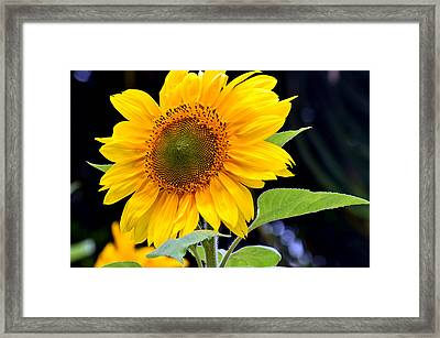 Against The Shadows Framed Print by Fraida Gutovich