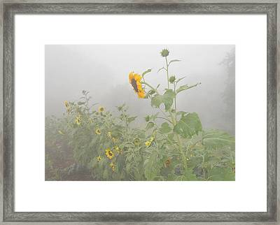 Framed Print featuring the photograph Against The Wind by Diannah Lynch