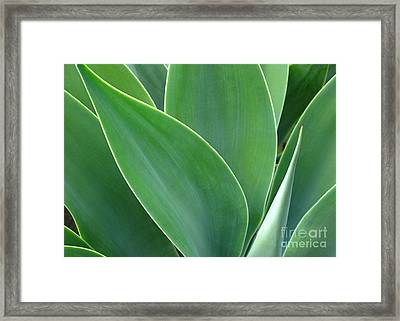 Framed Print featuring the photograph Agave 2 by Ranjini Kandasamy