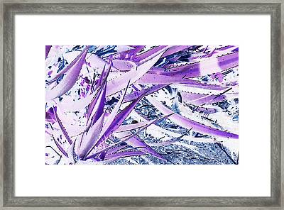 Framed Print featuring the photograph Agave Lechuguilla Number One by Louis Nugent