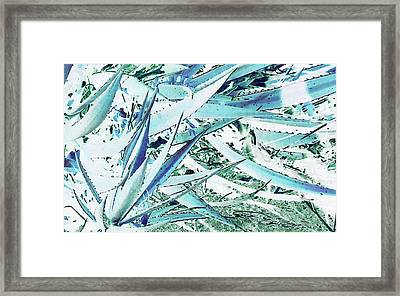 Framed Print featuring the photograph Agave Lechuguilla Number Two by Louis Nugent
