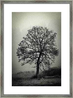 Framed Print featuring the photograph Age Old Tree by Steve McKinzie
