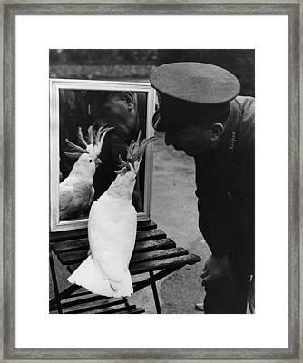 Aged Cocky Framed Print by Fox Photos