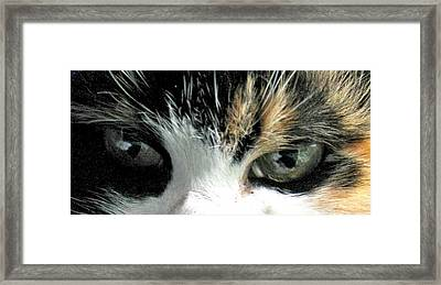 Aged Eyes Framed Print by Rory Sagner