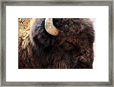 Framed Print featuring the photograph Ageless Bison Of Yellowstone by Yeates Photography