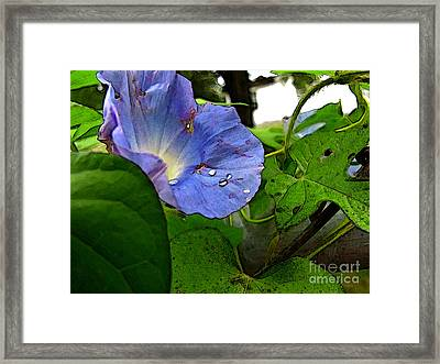 Framed Print featuring the digital art Aging Morning Glory by Debbie Portwood