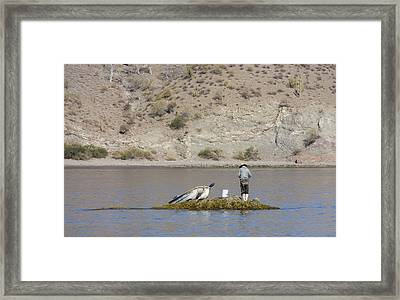 Agua Verde Fisherman  Framed Print by Anne Mott
