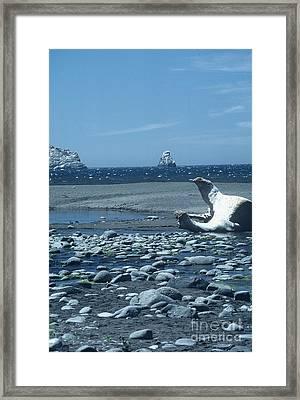 Ahoy Framed Print by Alcina Morello