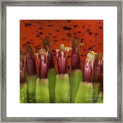 'ahui Mai'a O Kepaniwai Framed Print