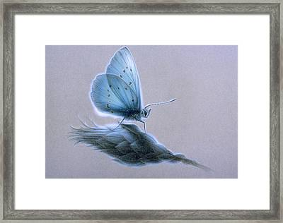 Ainsae Framed Print by Shawn Kawa