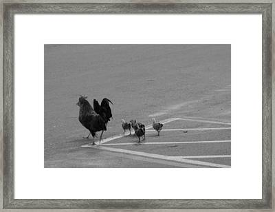 Aint Chicken Framed Print by Sean Green