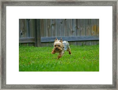 Framed Print featuring the photograph Airborn by Brian Wright