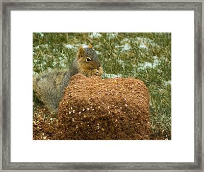 Aka Deer Feed Squirrel Framed Print by LeeAnn McLaneGoetz McLaneGoetzStudioLLCcom