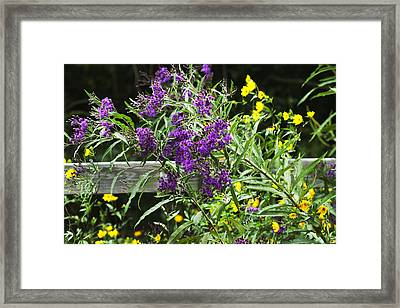 Alabama Purple Ironweed Wildflowers - Vernonia Gigantea Framed Print by Kathy Clark