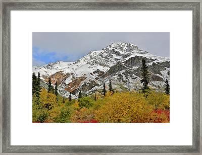 Alaska Fall Colors On Sheep Mountain Framed Print by Sam Amato