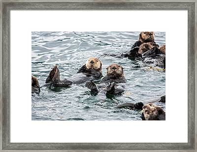 Alaskan Sea Otters Framed Print by Josh Whalen