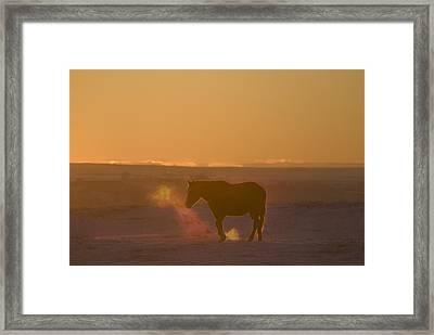 Alberta, Canada Horse At Sunset Framed Print