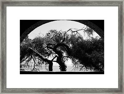 Alcatraz Tree Framed Print by Ty Helbach