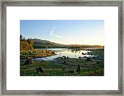 Alder Lake Wa At Sunset Framed Print