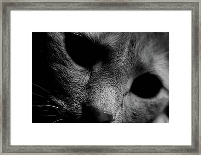 Alfie Two Framed Print by Jerry Cordeiro