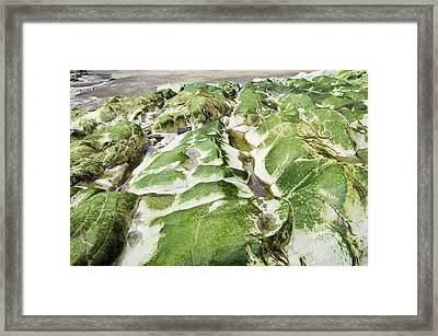 Algae Covered Rocks Framed Print by Georgette Douwma