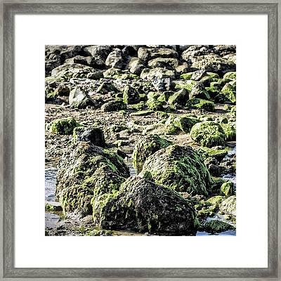 Algae Rocks Framed Print by Arya Swadharma