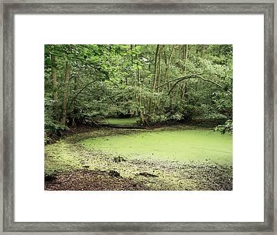 Algal Bloom In Pond Framed Print by Michael Marten
