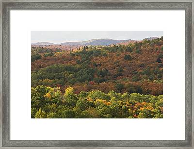 Algonquin In Autumn Framed Print by Cale Best