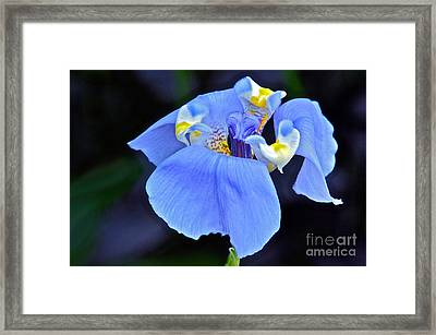 Alien Beauty Framed Print by Byron Varvarigos