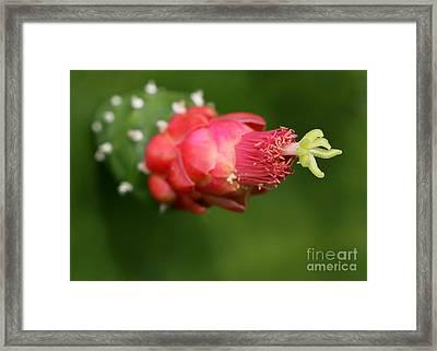 Alien Cactus Flower Framed Print by Sabrina L Ryan