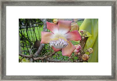 Alien Plant Framed Print by Daniel Young