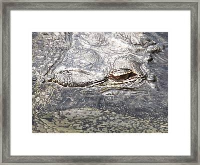 Aligatorscape Florida Framed Print by Valia Bradshaw