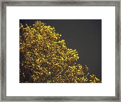 Alive Framed Print by Ed Smith