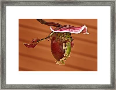 All Aboard Framed Print by Jean Noren