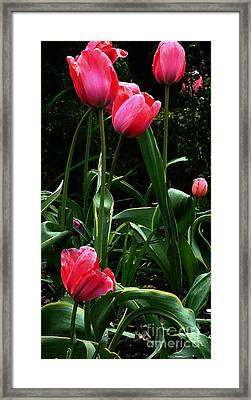 Framed Print featuring the digital art All About Tulips by Glenna McRae