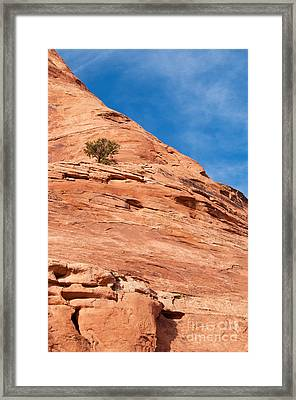 All Alone Framed Print by Bob and Nancy Kendrick