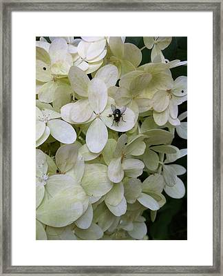All Alone In The Limelight Framed Print by Nelson F Martinez