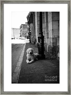 All Alone Framed Print by Leslie Leda