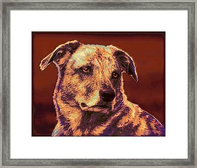 All American Mutt 2 Framed Print by Jane Schnetlage